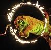 Цирки в Конаково
